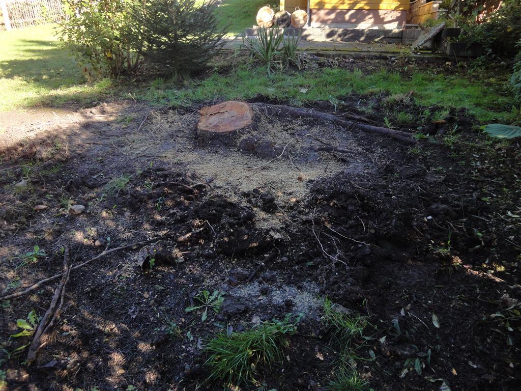 Lieblings Baumstumpf von Hand entfernen: Werkzeuge und Tipps #GM_32