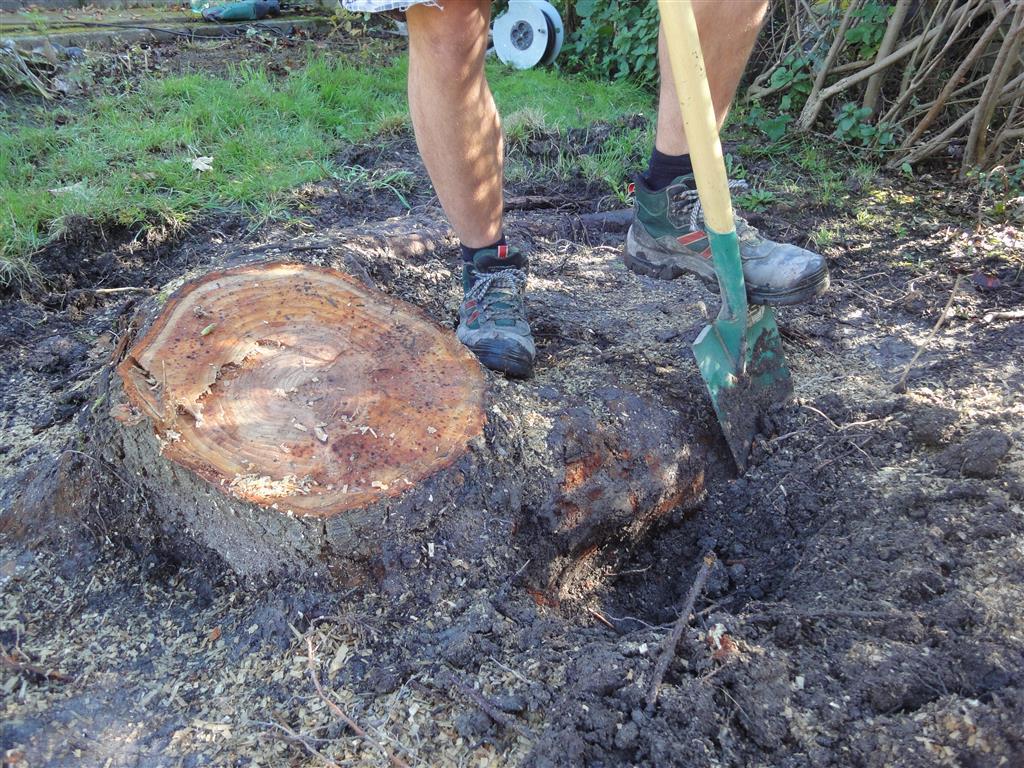 Berühmt Baumstumpf von Hand entfernen: Werkzeuge und Tipps #KP_15