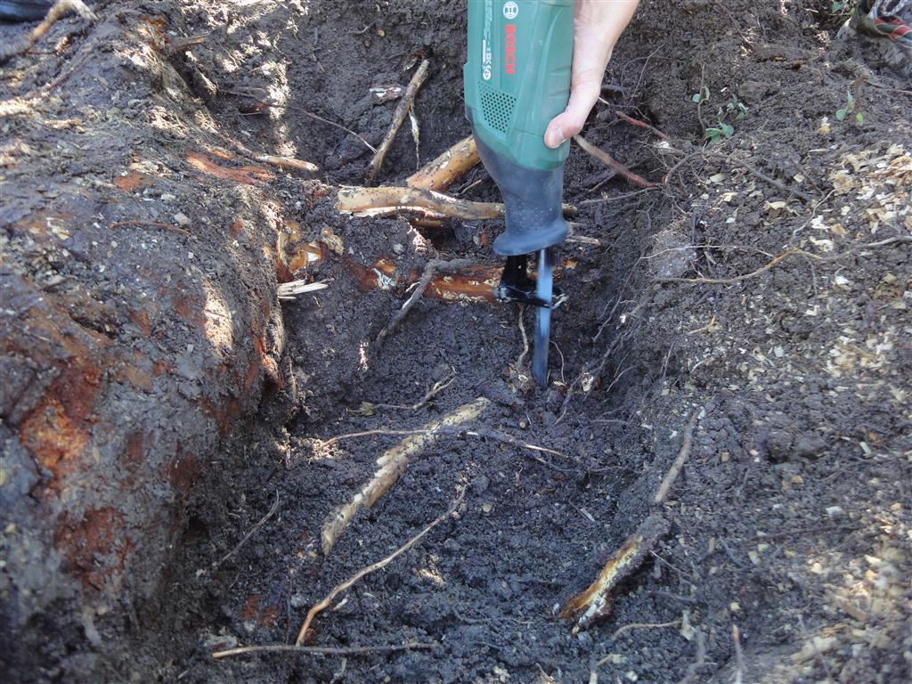 Beliebt Bevorzugt Baumstumpf von Hand entfernen: Werkzeuge und Tipps &CM_61